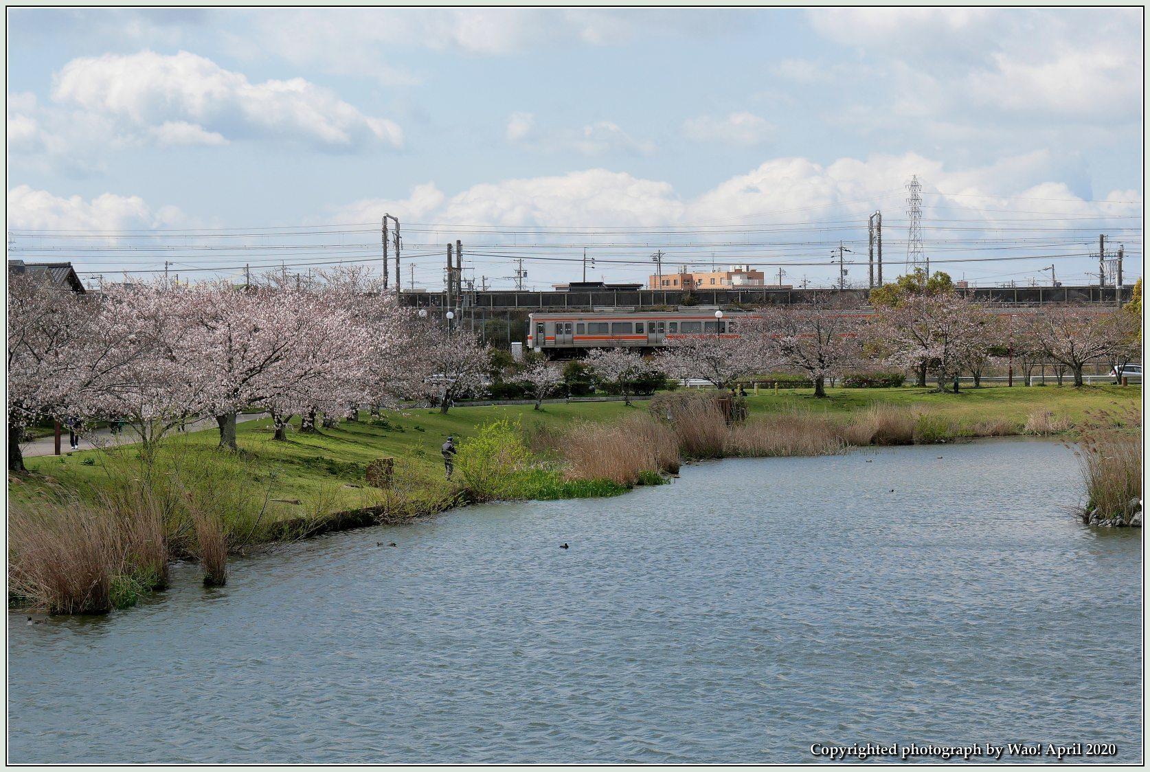 桜新幹線と在来線が行ったり来たり_c0198669_17433594.jpg