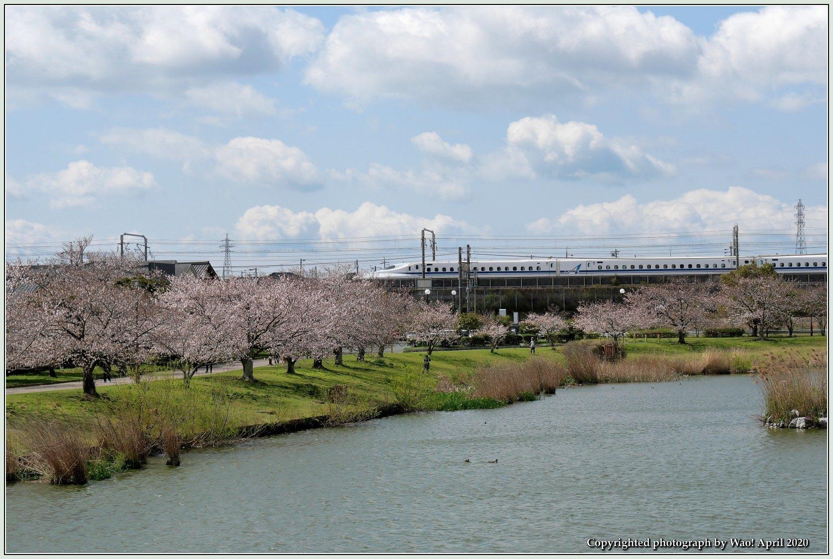 桜新幹線と在来線が行ったり来たり_c0198669_17434646.jpg