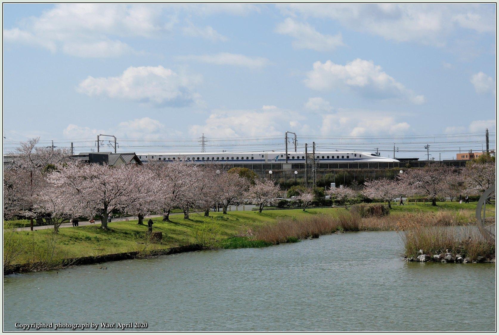 桜新幹線と在来線が行ったり来たり_c0198669_17434833.jpg
