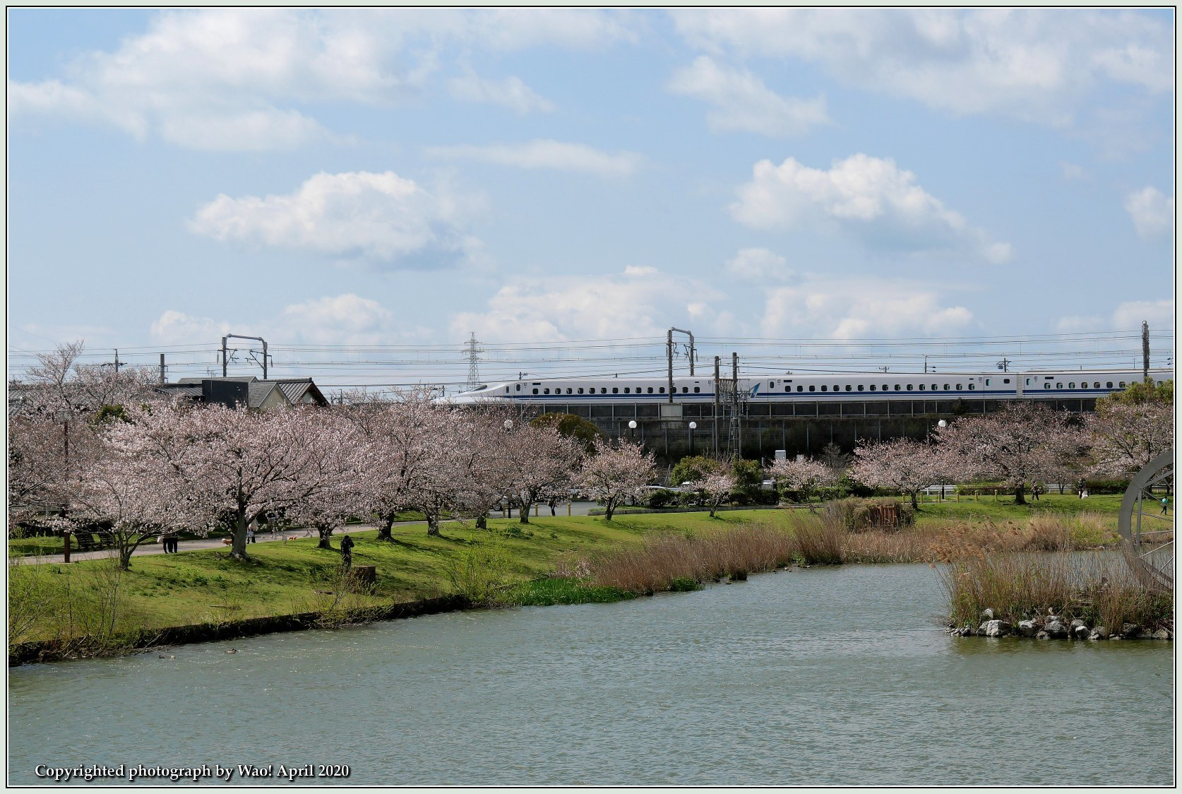 桜新幹線と在来線が行ったり来たり_c0198669_17440831.jpg