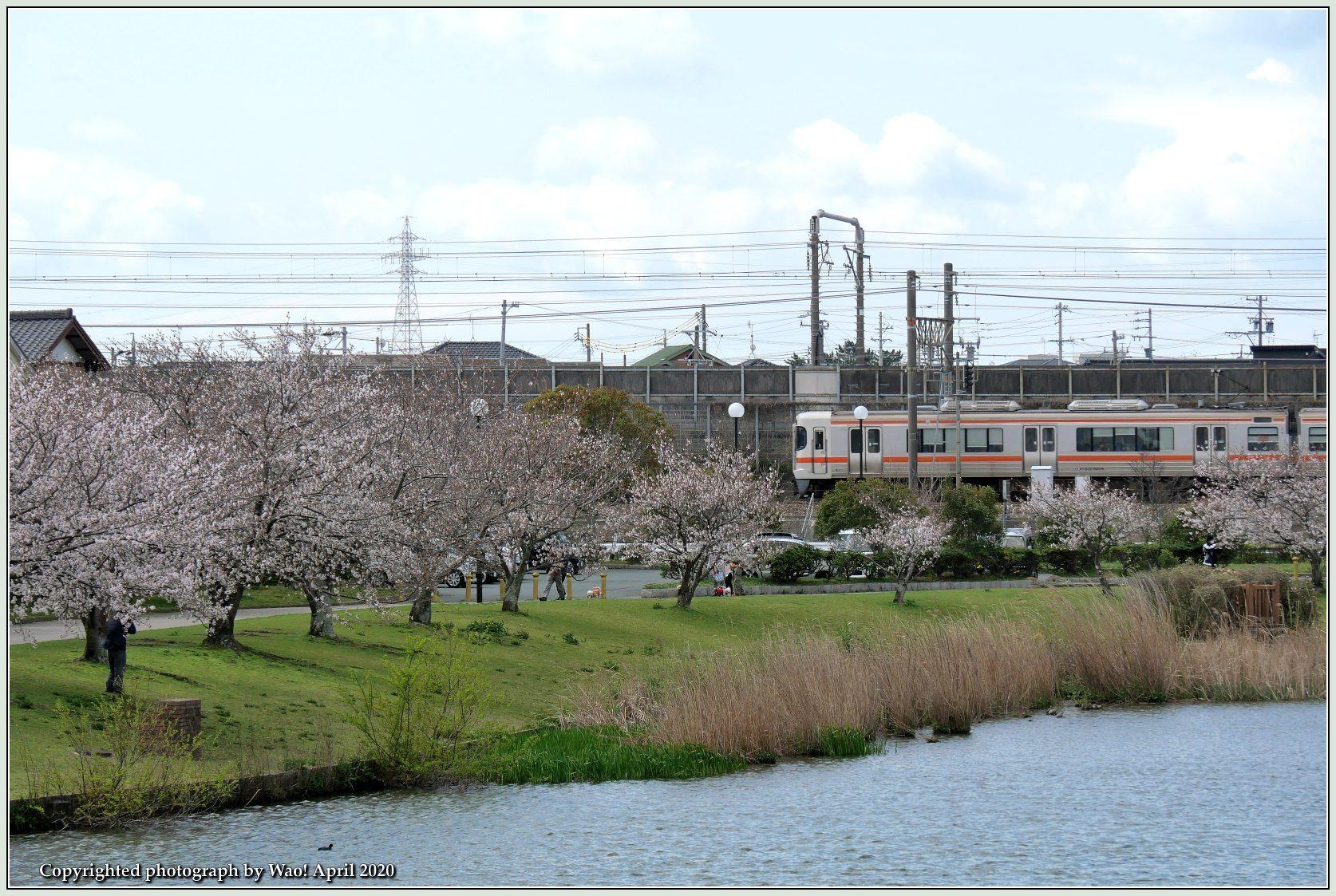 桜新幹線と在来線が行ったり来たり_c0198669_17441096.jpg