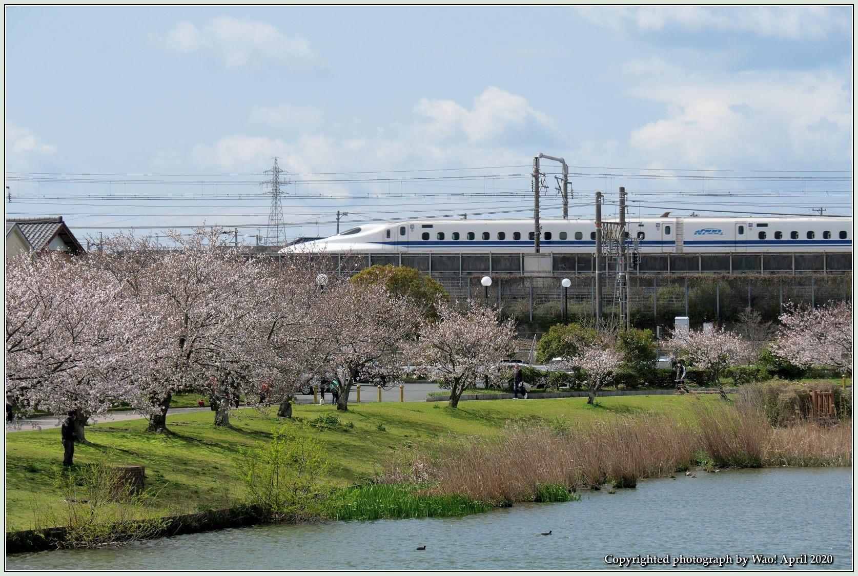 桜新幹線と在来線が行ったり来たり_c0198669_17441315.jpg