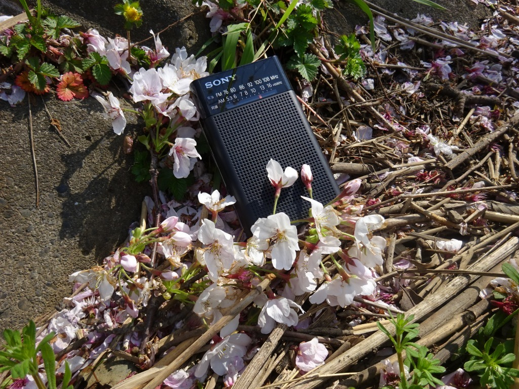 志木花見!2020第二段 近所の柳瀬川にて暴風だった昨日!_d0061678_17493275.jpg