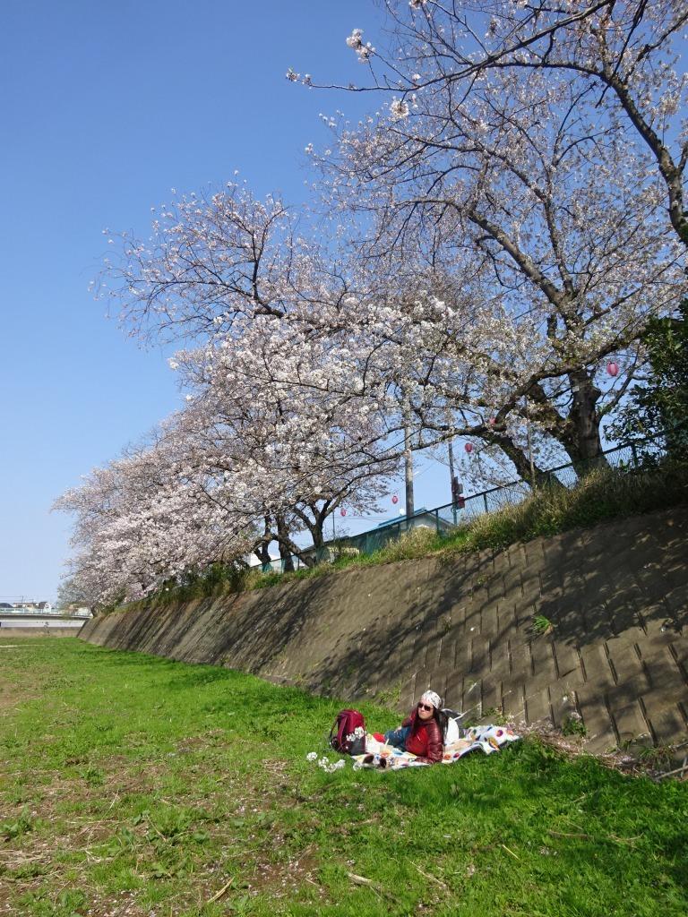 志木花見!2020第二段 近所の柳瀬川にて暴風だった昨日!_d0061678_17510937.jpg