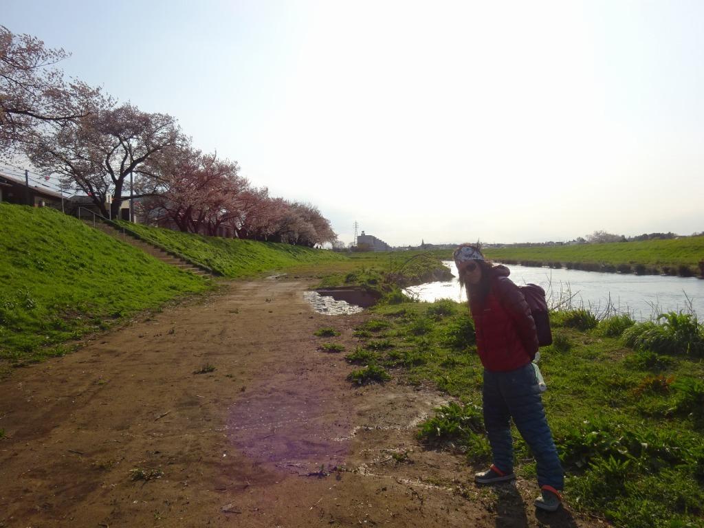 志木花見!2020第二段 近所の柳瀬川にて暴風だった昨日!_d0061678_17523213.jpg