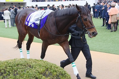 キセキ(19'有馬記念5)_b0015386_20541852.jpg