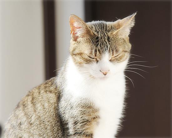 猫の意地_a0389088_04120846.jpg