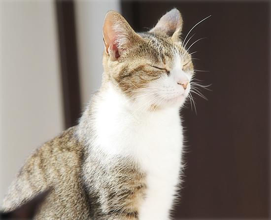 猫の意地_a0389088_04120949.jpg