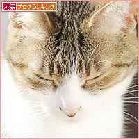 猫の意地_a0389088_04120964.jpg