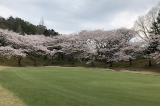 桜満開_a0233991_19431009.jpg