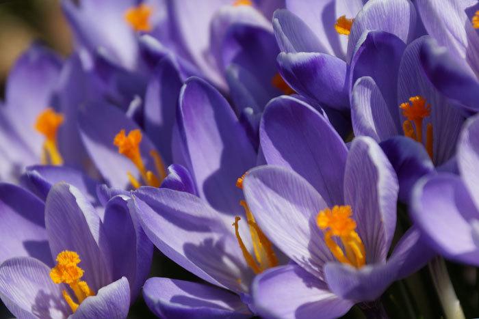 春_d0162994_14243051.jpg