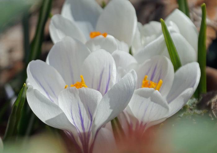 春_d0162994_14243934.jpg