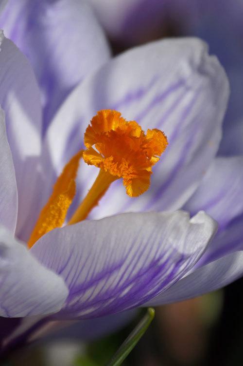 春_d0162994_14284154.jpg