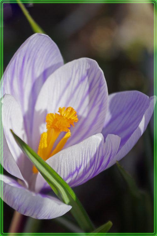春_d0162994_14285070.jpg