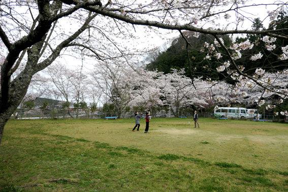 満開の桜にコイ泳ぐ_b0145296_17311952.jpg