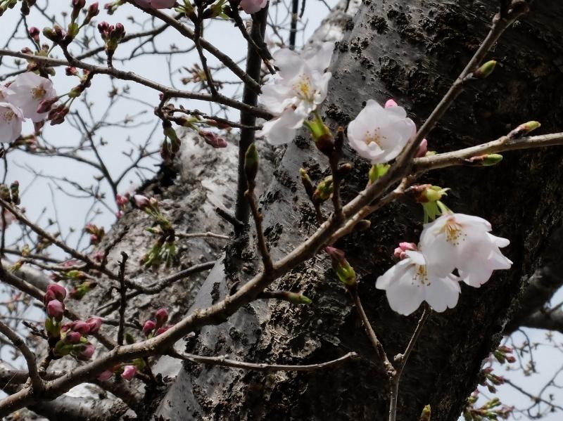 春なのに_b0212396_10314719.jpg