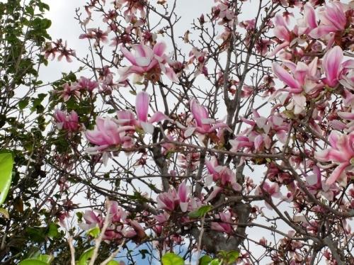 春なのに_b0212396_10345857.jpg