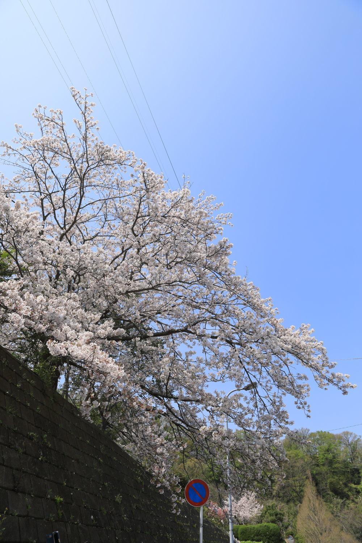 春のお散歩日和♪_b0275998_16414645.jpg