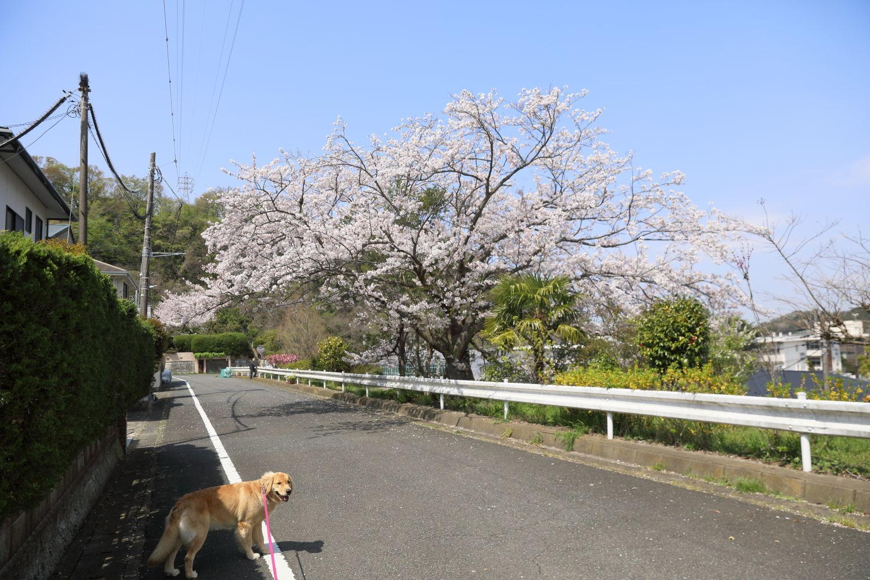 春のお散歩日和♪_b0275998_16415573.jpg
