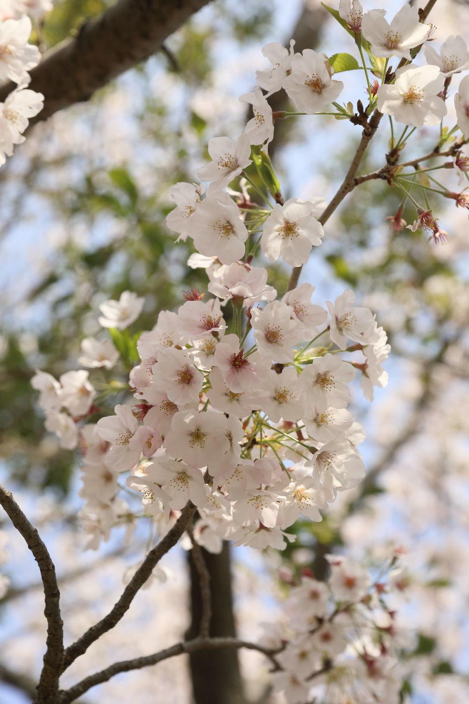 春のお散歩日和♪_b0275998_16420231.jpg