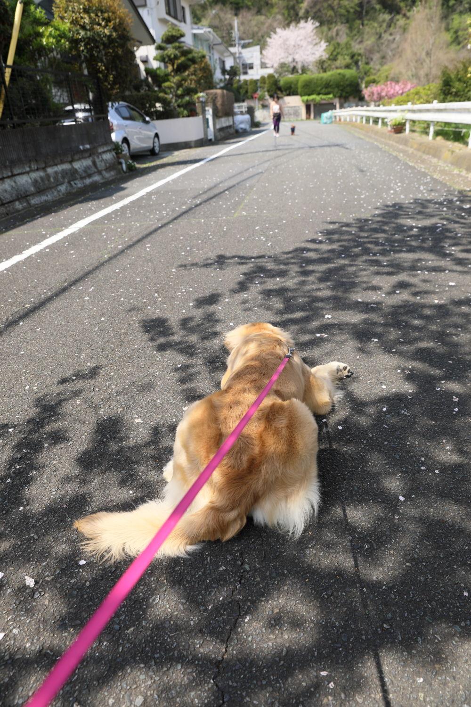 春のお散歩日和♪_b0275998_16420406.jpg