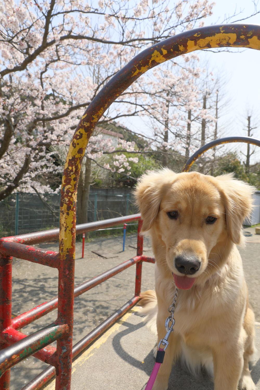 春のお散歩日和♪_b0275998_16422183.jpg