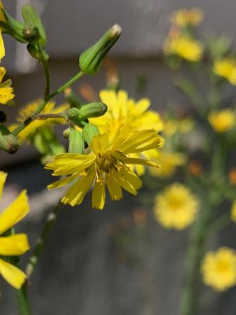 4月の庭 2020 _f0239100_23475993.jpg