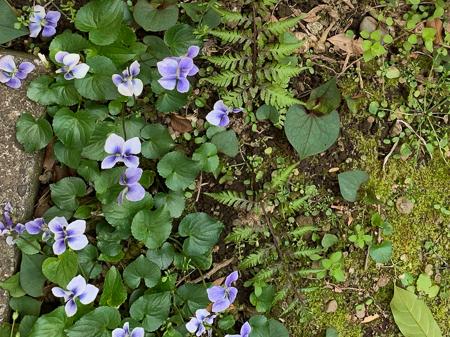 4月の庭 2020 _f0239100_23551419.jpg