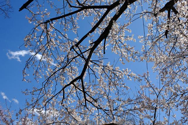 春の秩父へ♪_f0179404_11271356.jpg