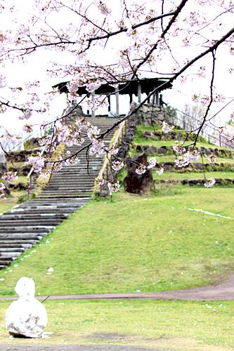 photo lesson - 桜_c0311715_17410253.jpg