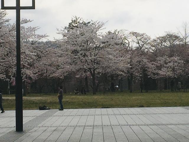 桜は開花したけど、、、_d0171222_15005485.jpeg