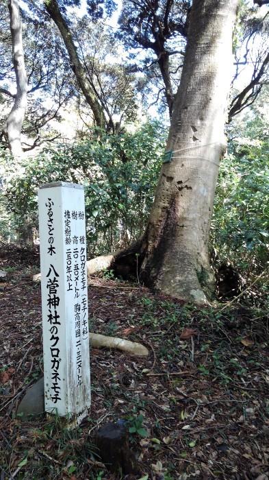 ■散歩【愛川町 八菅山迄のウォーキング】_b0033423_01402240.jpg