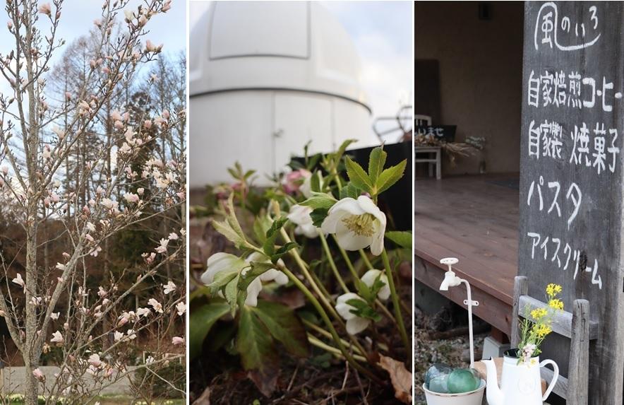 カフェの庭で_a0212730_18591011.jpg