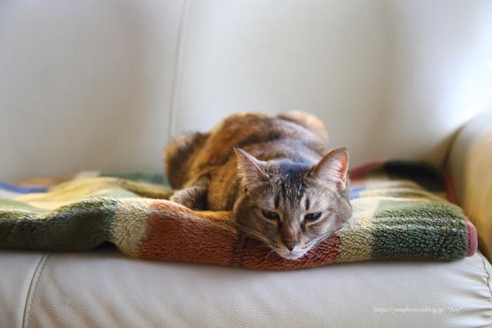 猫がいる暮らし - 26 -_e0347431_16385812.jpg