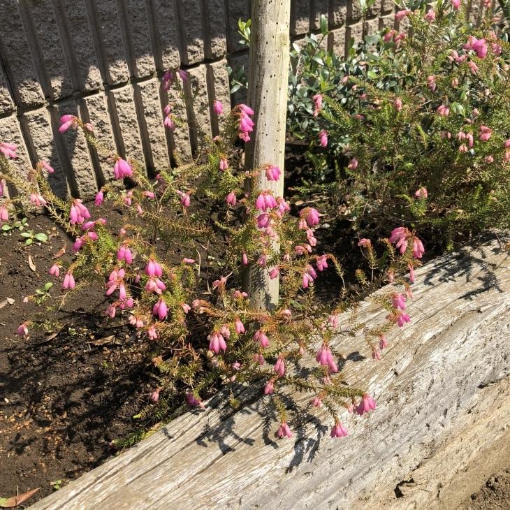 お花に癒されて_b0308135_11025604.jpeg