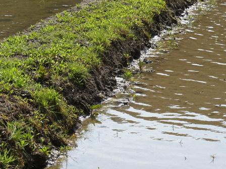 水の中のいきものたちも、草花も動き始めています_a0123836_17212801.jpg
