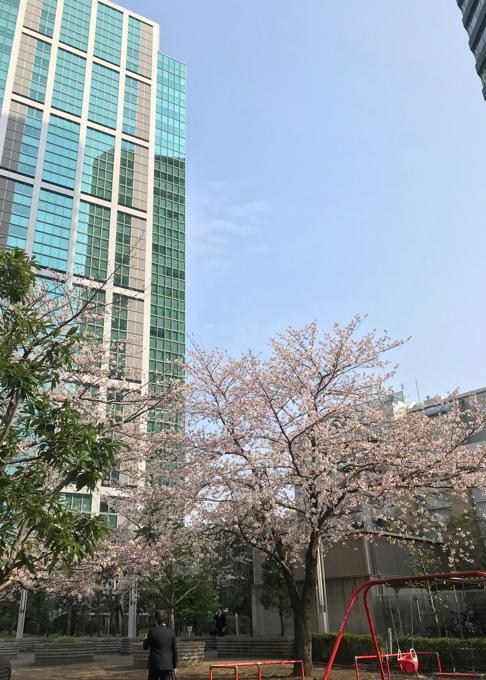 ご近所の桜 その2 葉桜になっちゃったけど、それを愛でながらせっせと歩く篇_d0027243_07493624.jpg