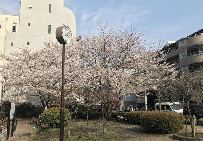 ご近所の桜 その2 葉桜になっちゃったけど、それを愛でながらせっせと歩く篇_d0027243_07494954.jpg