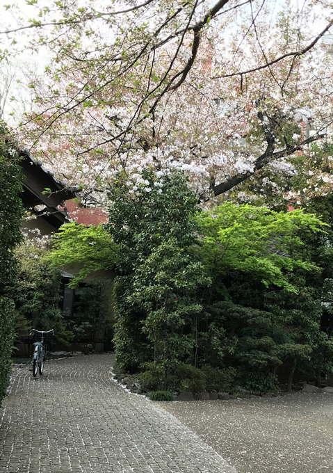 ご近所の桜 その2 葉桜になっちゃったけど、それを愛でながらせっせと歩く篇_d0027243_07495057.jpg