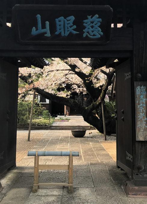 ご近所の桜 その2 葉桜になっちゃったけど、それを愛でながらせっせと歩く篇_d0027243_07495073.jpg