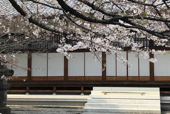 ご近所の桜 その2 葉桜になっちゃったけど、それを愛でながらせっせと歩く篇_d0027243_07495084.jpg
