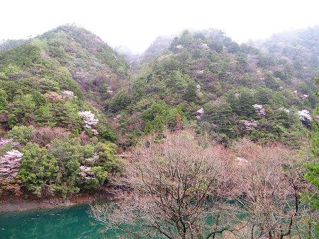 満開の山桜と湯の花とバクテリア・オマケはマンガン鉱石【奈良・奥入之波】3/28_d0387443_21144328.jpg