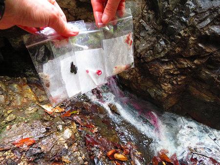 満開の山桜と湯の花とバクテリア・オマケはマンガン鉱石【奈良・奥入之波】3/28_d0387443_21144403.jpg