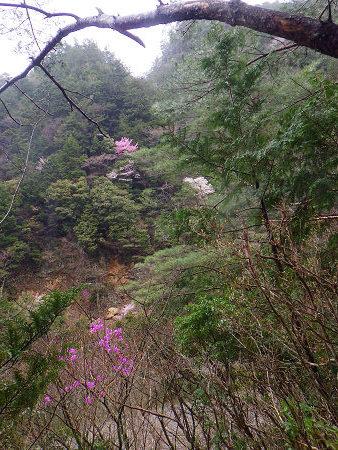 満開の山桜と湯の花とバクテリア・オマケはマンガン鉱石【奈良・奥入之波】3/28_d0387443_21163629.jpg