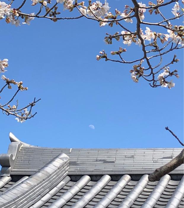 春先の日々_d0099845_01075744.jpg