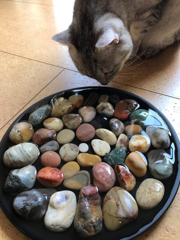【海で拾った石】 2020年石拾い始め_f0169147_16513039.jpg