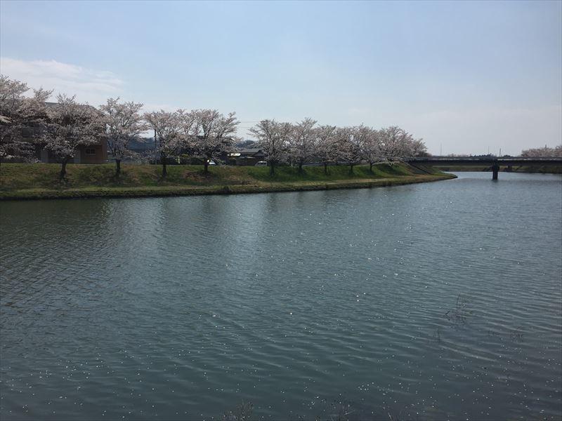 御嵩町 では満開の桜が水面に_c0074553_19014895.jpg