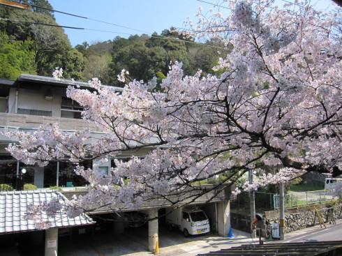 2020年4月4日 桜実況中継_c0078659_13330973.jpg