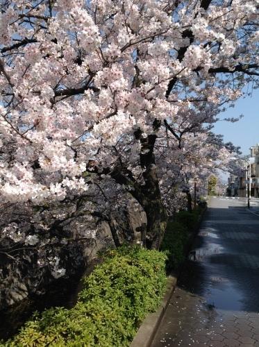 京都桜たより 2020_b0153663_14233845.jpeg