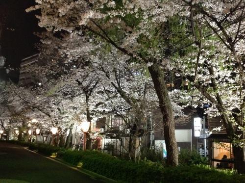 京都桜たより 2020_b0153663_14253045.jpeg